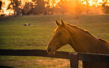 Sunset with horse at fence